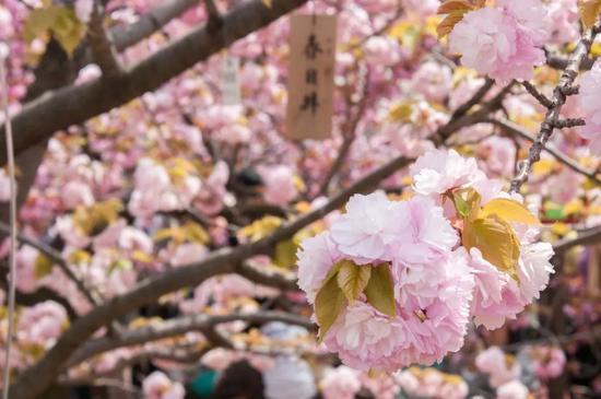 ©Tomoharu Mogami/Flickr